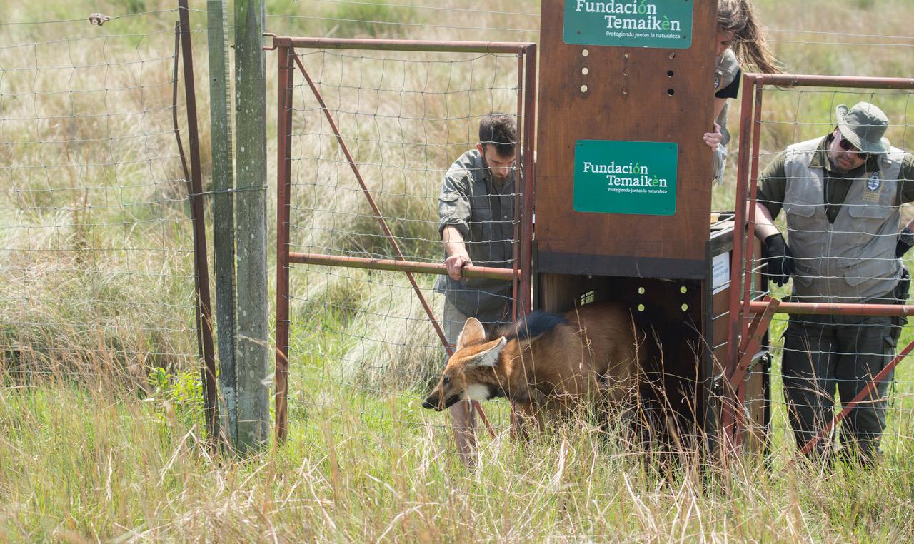 Al rescate de la fauna en peligro